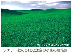 OTCO認定の小麦の栽培畑
