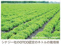 OTCO認定のネトルの栽培畑
