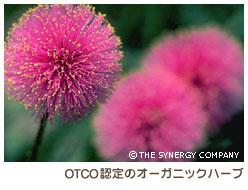 OTCO認定のオーガニックハーブ