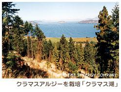 クラマスアルジーが栽培されている