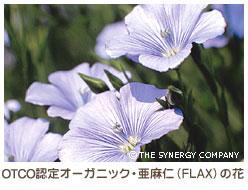 OTCOが認定するオーガニック・亜麻仁(FLAX)の花